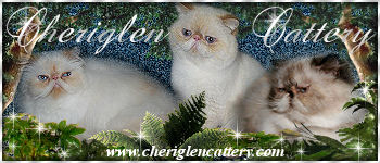 cheriglencattery